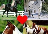 Puzzles Montage de chevaux