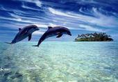 Puzzle Jeu puzzle dauphin