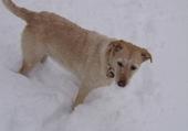 Puzzle hooligirl dans la neige