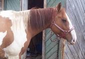 Puzzle Jolie le cheval