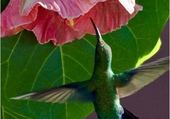 Puzzle Nectar