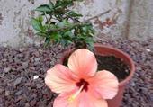 Puzzle Taquin Fleur d'été