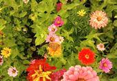 Puzzle Jeux de puzzle : Papillon sur fleurs
