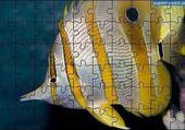 Puzzle le poisseau adorable