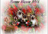Taquin bonne année 2011