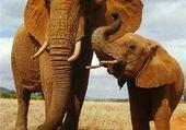 Puzzle Puzzle gratuit Elephants