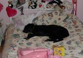 Puzzle vicky fait la sieste