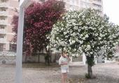 Jeu puzzle que de fleurs