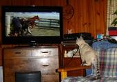 Puzzles bourreau de cheval!!!!!!