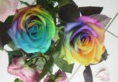 Puzzle roses en couleur