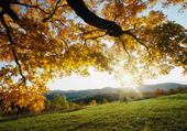 Puzzle en ligne L'automne