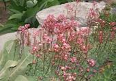 Puzzle en ligne Fleurs roses des Alpes