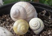 Puzzle gratuit Coquilles d'escargots