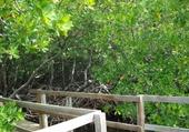 Puzzle Mangrove
