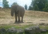 Puzzle Jeu puzzle zoo