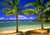 Jeux de puzzle : plage paradisiaque
