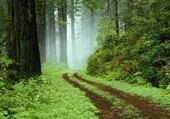 Puzzle la forest