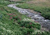 la rivière des reves