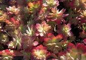 Puzzle Plantes grasses au soleil