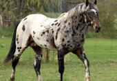 Jeu puzzle mon cheval