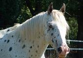 Puzzle gratuit mon cheval