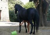 Puzzle puzzle mon cheval