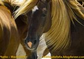 Puzzle Rêve de cheval