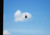 Puzzles une araignée