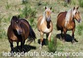 Puzzle gratuit Trois gentils chevaux