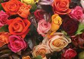 Puzzle Jeux de puzzle : roses