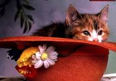 Jeux de puzzle : chaton