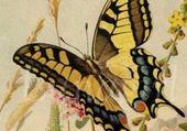 Puzzle papillon