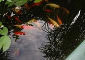 Puzzle les poissons