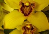 Puzzle orchidée
