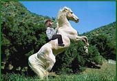 Puzzle gratuit Hue cheval
