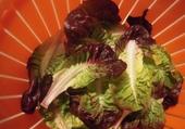 Puzzle Quelle salade !