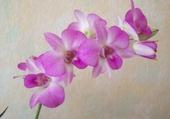 Puzzle gratuit Mon orchidée bambou