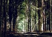 Jeu puzzle Fond de forêt