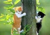 Puzzle Puzzle en ligne chat arbre