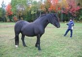 cheval Rocky