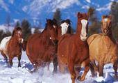 Puzzle en ligne chevaux dans la neige