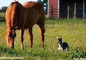 Jeu puzzle Cheval et chien dans l'herbe