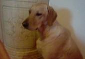 Jeux de puzzle : puzzle de mon chien