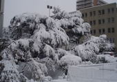 neige à marseille 2009