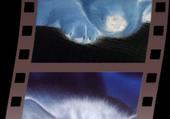Puzzle pelicule animeaux (chien et chat