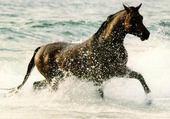 Jeu puzzle cheval dans lo