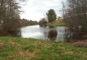Puzzle un étang