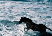 le cheval noir dans l'eau