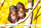 Puzzle Jeux de puzzle : les singe