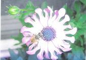 Jeu puzzle L'abeille et sa fleur